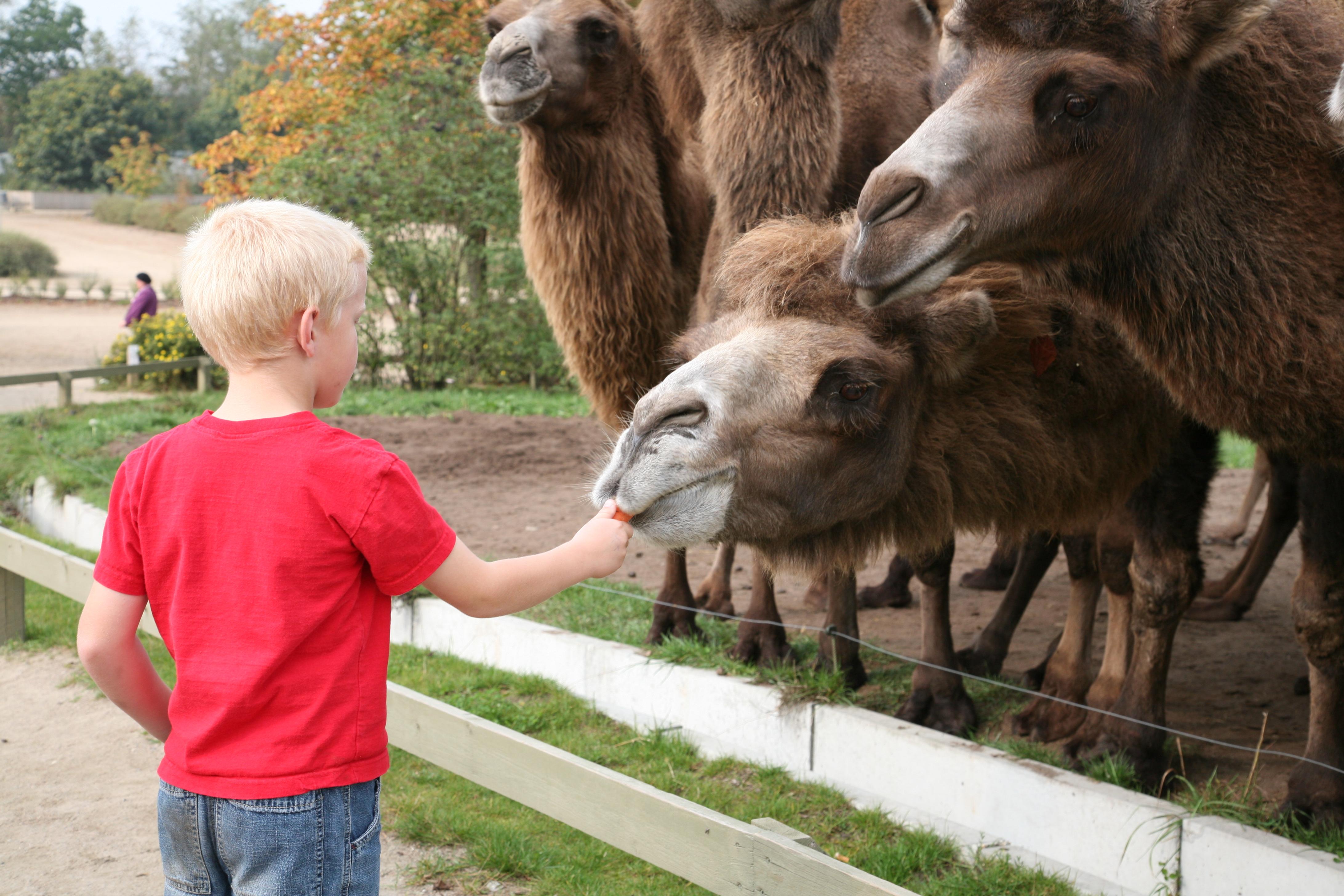 rabat til givskud zoo