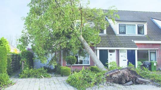 storm, træ, hus