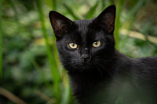 En sort almindelig kat står i noget højt græs og kigger på kameraet.