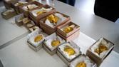 Guldskat, undersøgelser, Foto krediteres Vejlemuseerne (6).jpg