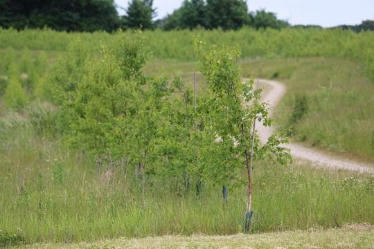 Elmelund Skov.jpg